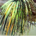 Custom Jig Skirt - Yellow Perch (2 Pack)